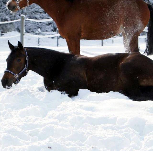 Pferd im Schnee auf der Koppel